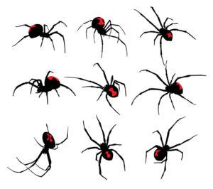 Black Widow spider set on white background