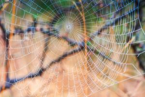 Spider net with dew close-up.