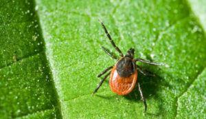 Spider on green leaf.
