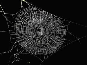 Spider web in the dark.