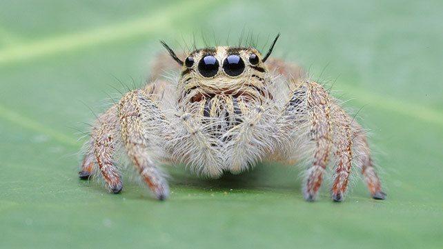 Spider on a leaf close-up.
