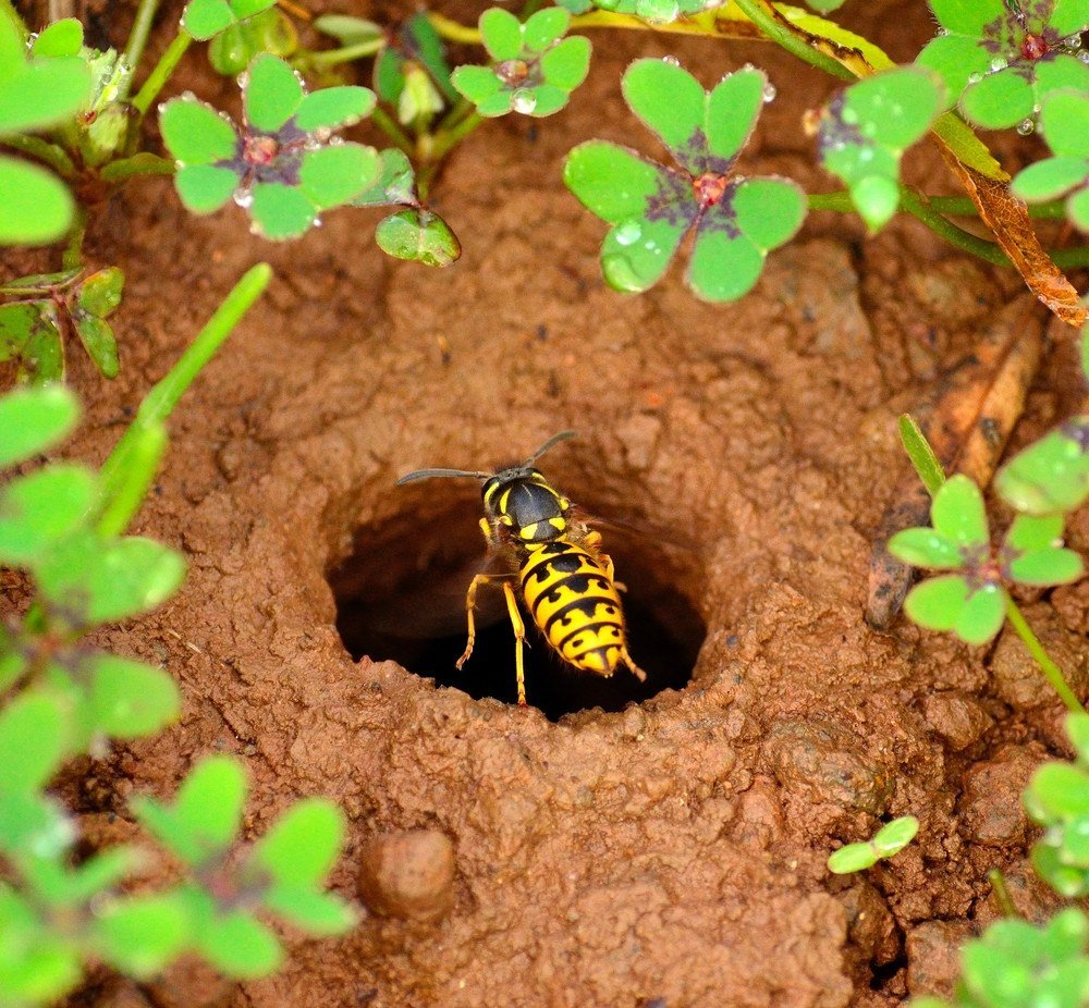 How To Get Rid Of Wasp Nests A Complete Guide Pest Wiki