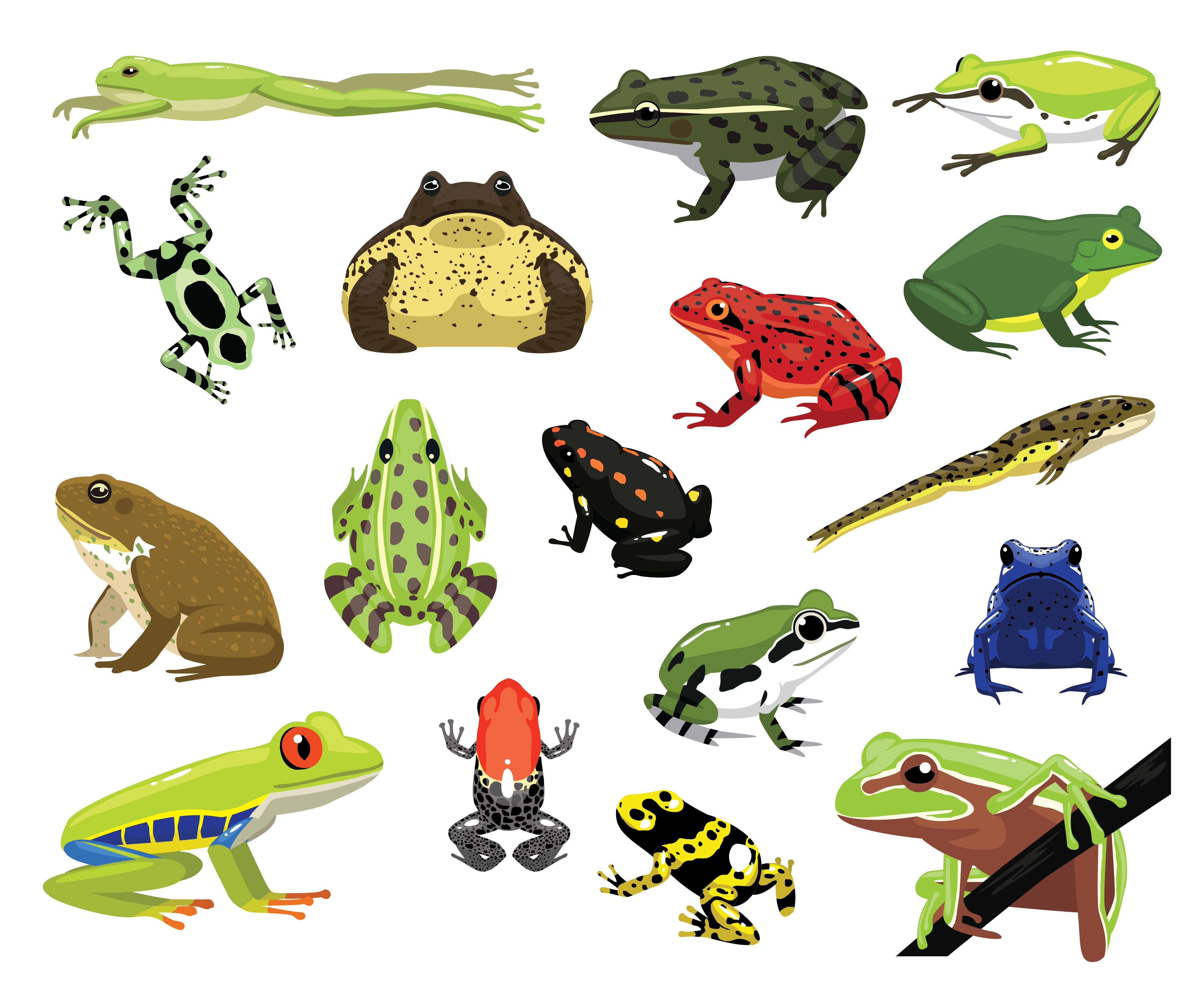 Various frogs cartoon vector illustration on the white.