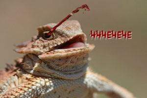 Funny picture of horned lizard blood squirting.