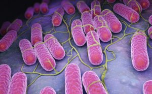 Culture of Salmonella bacteria and the 3D illustration.