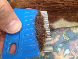 best flea comb