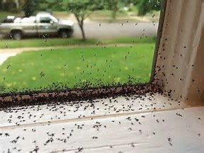 How To Kill Gnats In Your Bathroom Pest Wiki