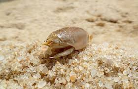 Horrible Sand Flies