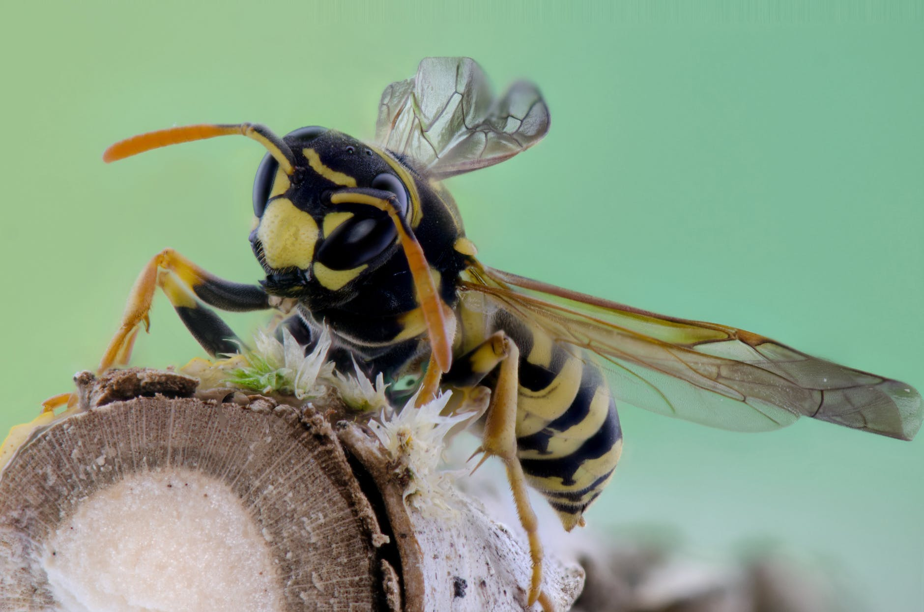 Top 5 Best Wasp Sprays to Buy Now (2019