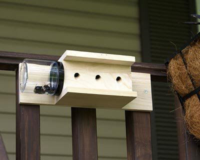 Back Mount Carpenter Bee Traps