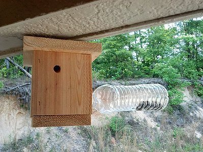Bees N Things Plastic Bottle Carpenter Bee Trap
