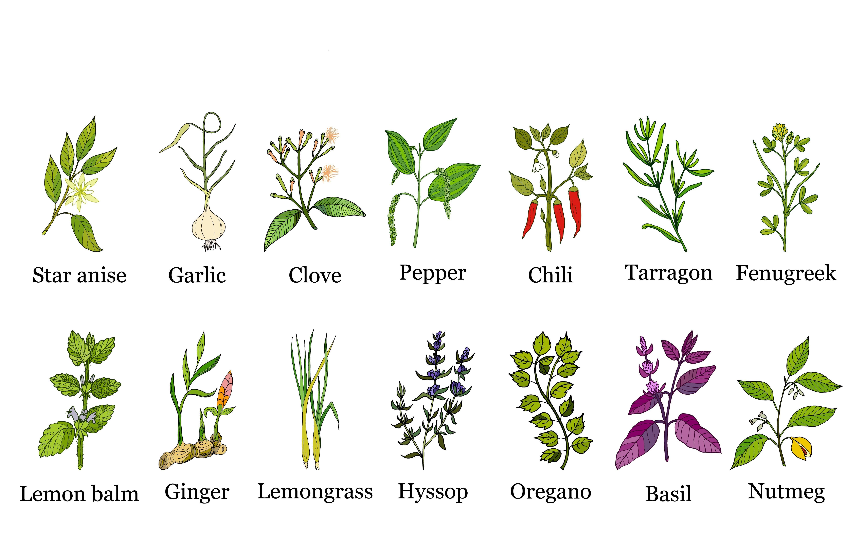 Best Natural bee repellents