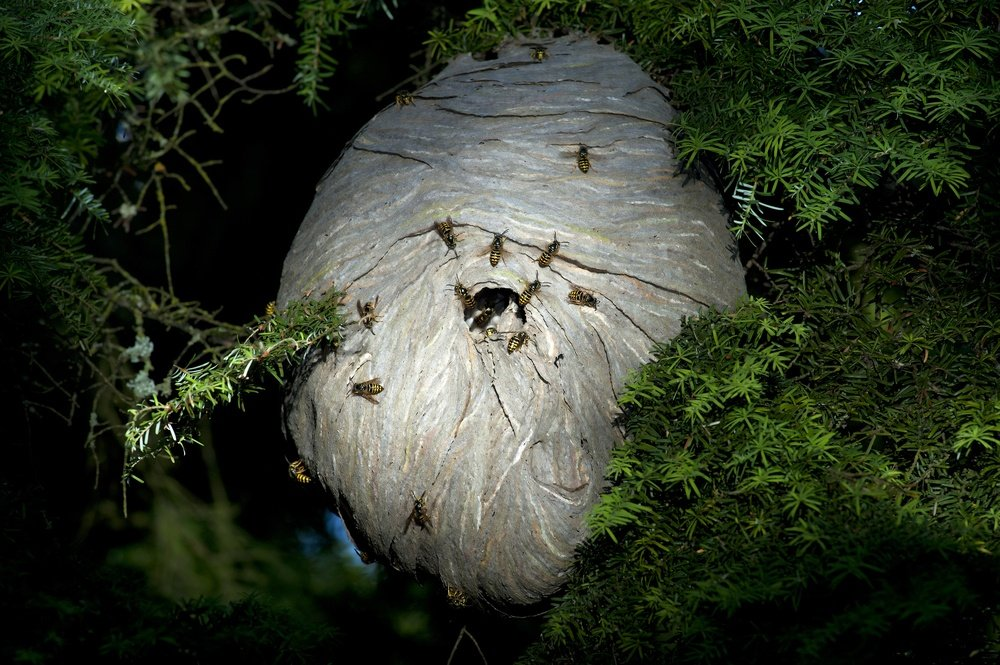 Black Bee Nest
