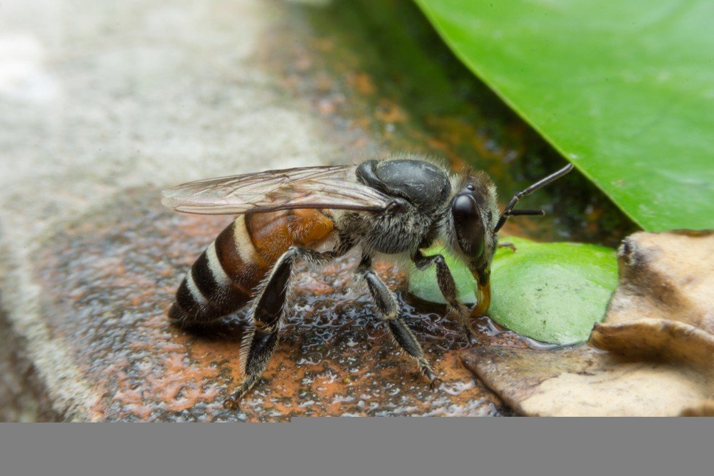 9 Best Products to Control Black Bees