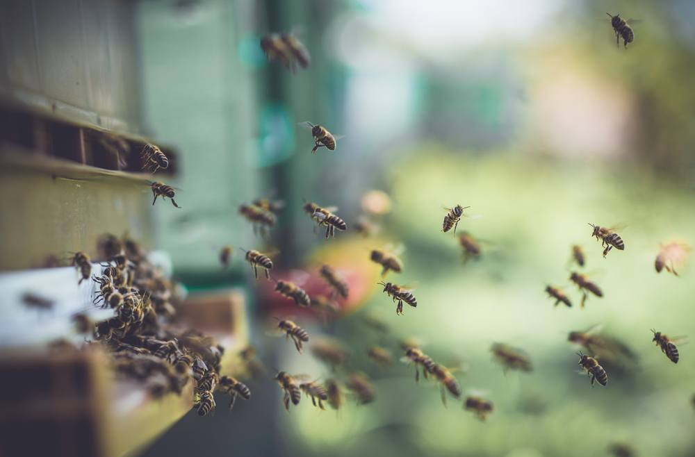 How to Get Rid of Bees Without Killing Them? - Pest Wiki