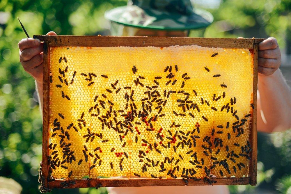 Outstanding bee relellent