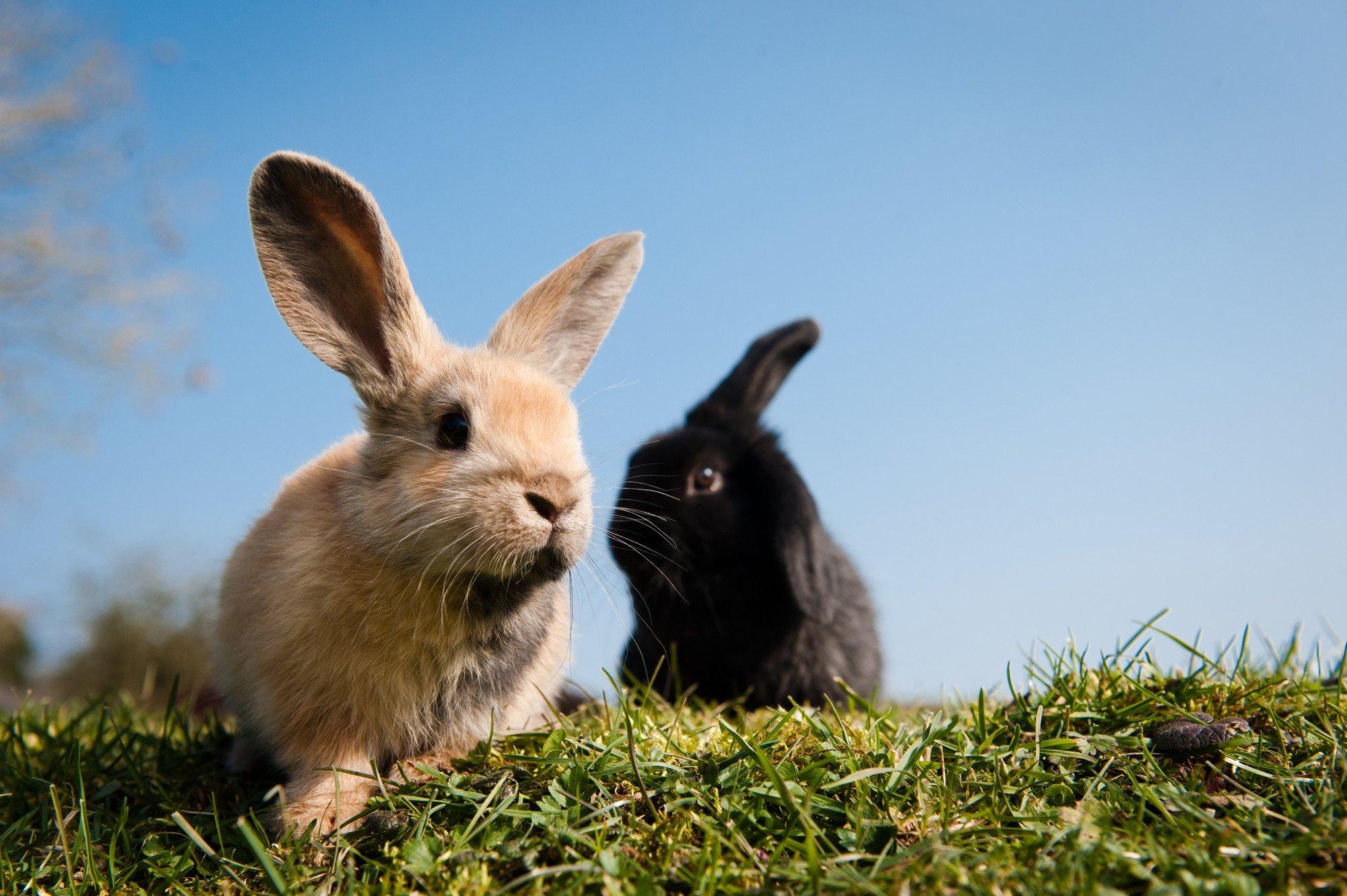 Rabbit Repellents: 5 Natural Options