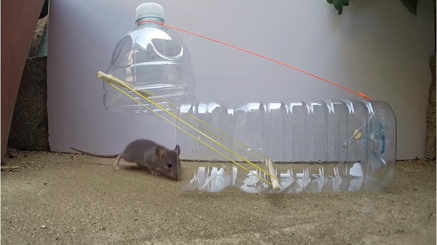 Bottle neck mouse trap