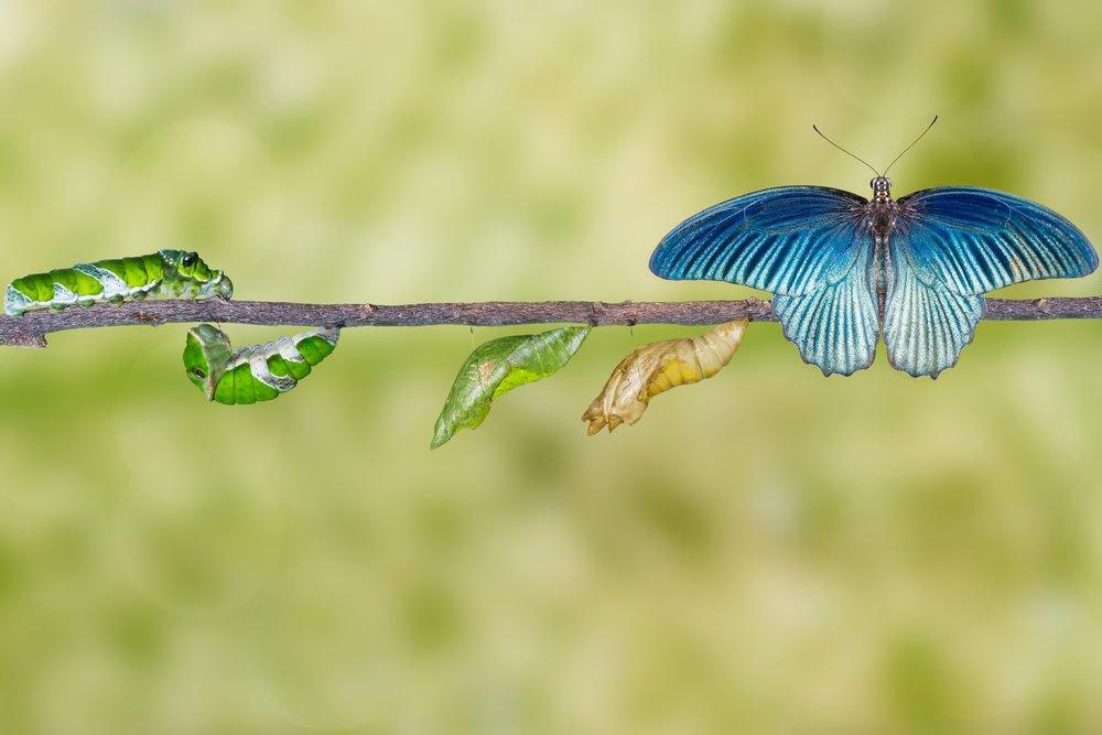 Caterpillars Become Butterflies