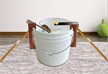 Countertop bucket mouse trap