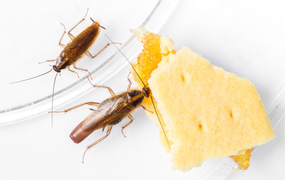 roaches in you house