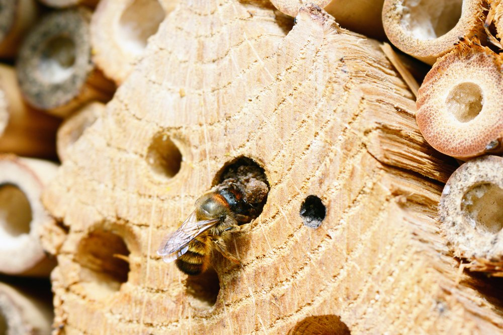 Solitary Bee Nest