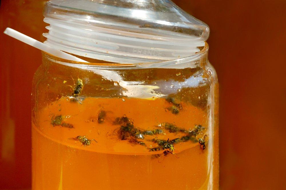 Honey bait