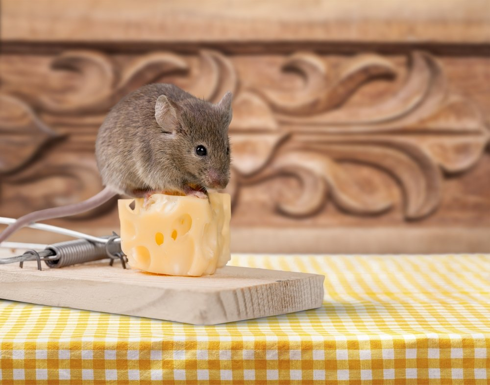 6 Easy Homemade (DIY) Mouse Traps