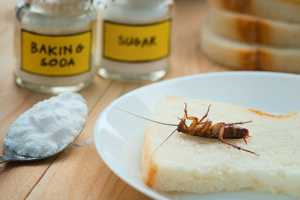 How To Kill Roaches With Borax Pest Wiki