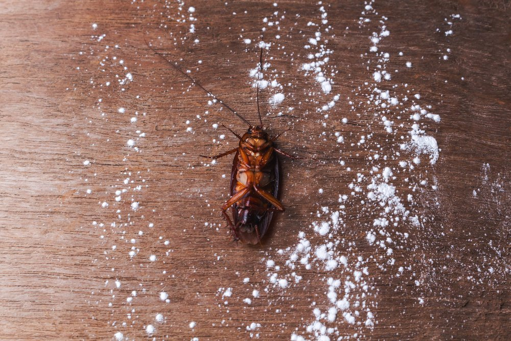 borax kill roaches