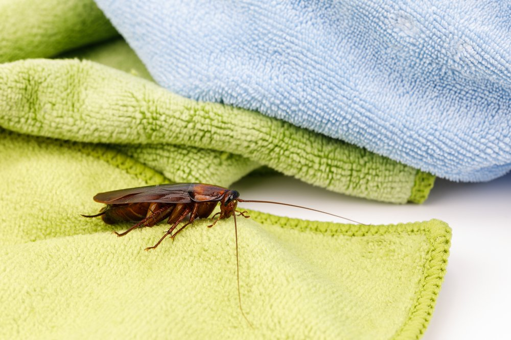roaches in your house