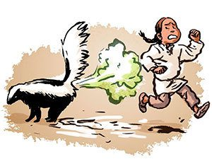 Easy Ways to Get Skunk Smell out of the House - Pest Wiki