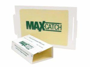 Catch Master Glue Traps