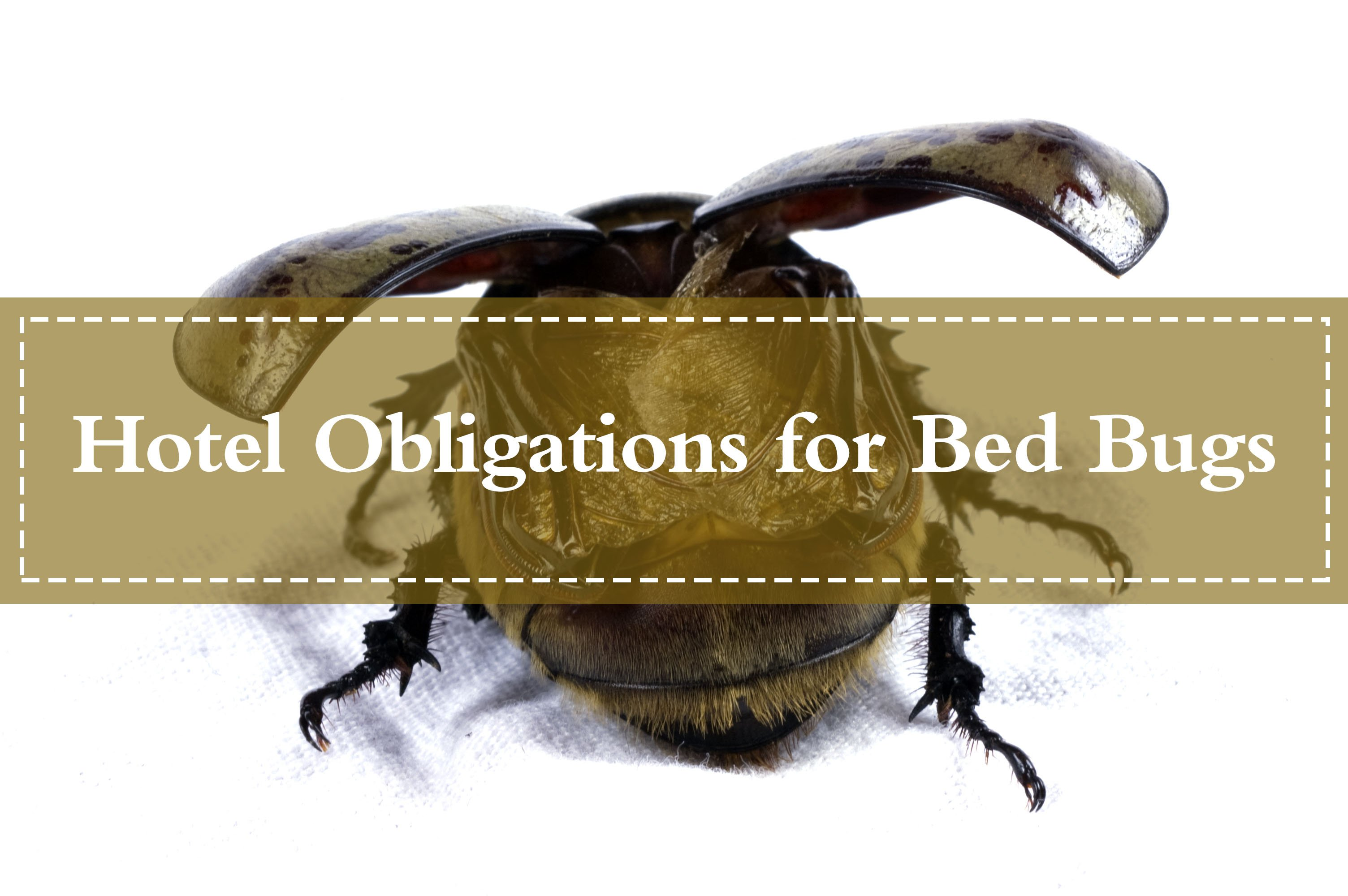 Hotel Bed Bug Compensation (Refund): What Rights Do You Have? - Pest