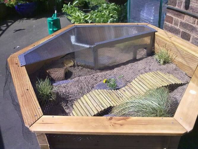A Tortoise Habitat in Your Home