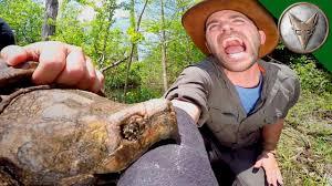 Alligator Snapping Turtles bite