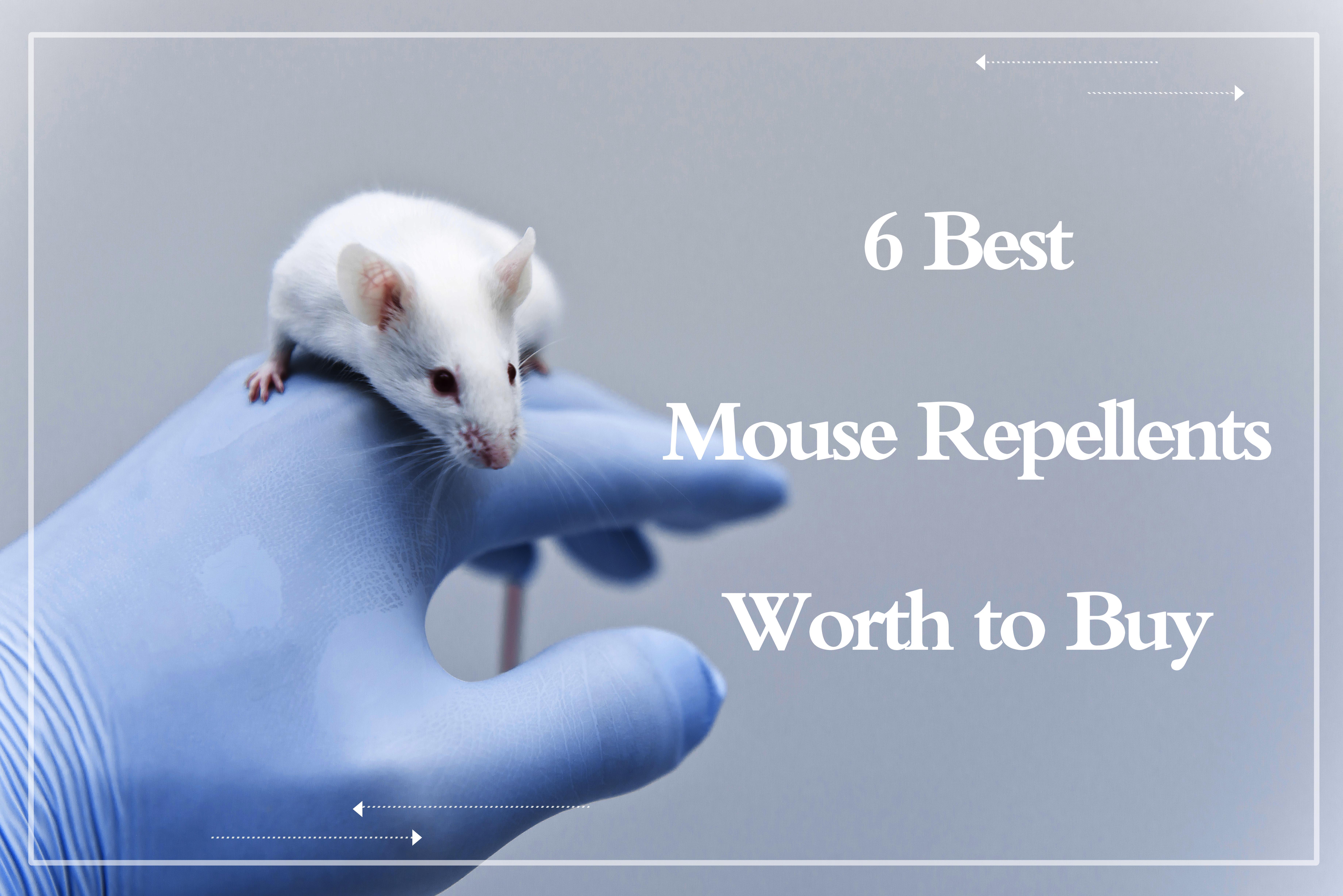 Best Mouse Repellents