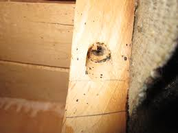 Bed Bugs on Other Furniture
