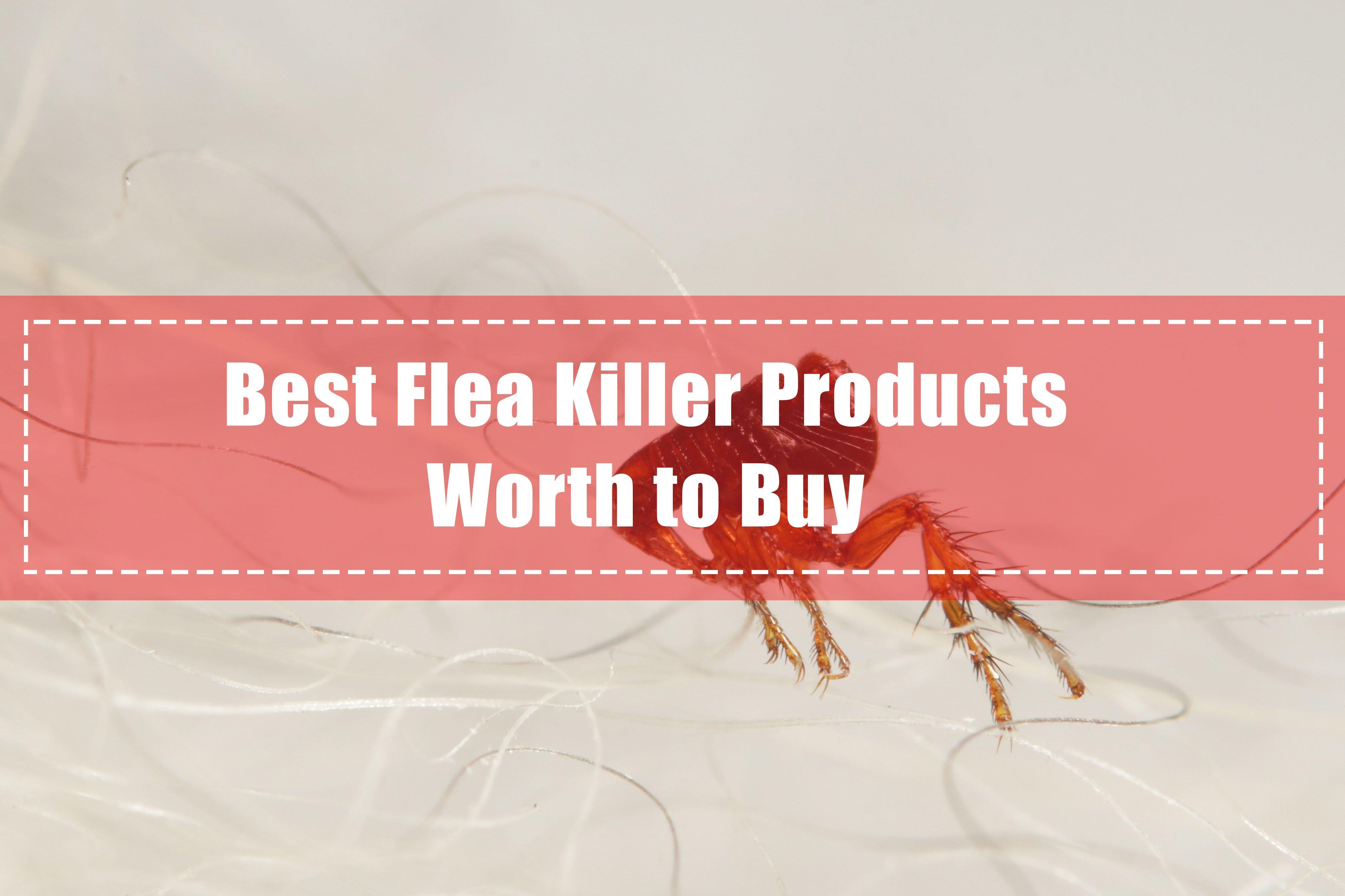 Best Flea Killer Products