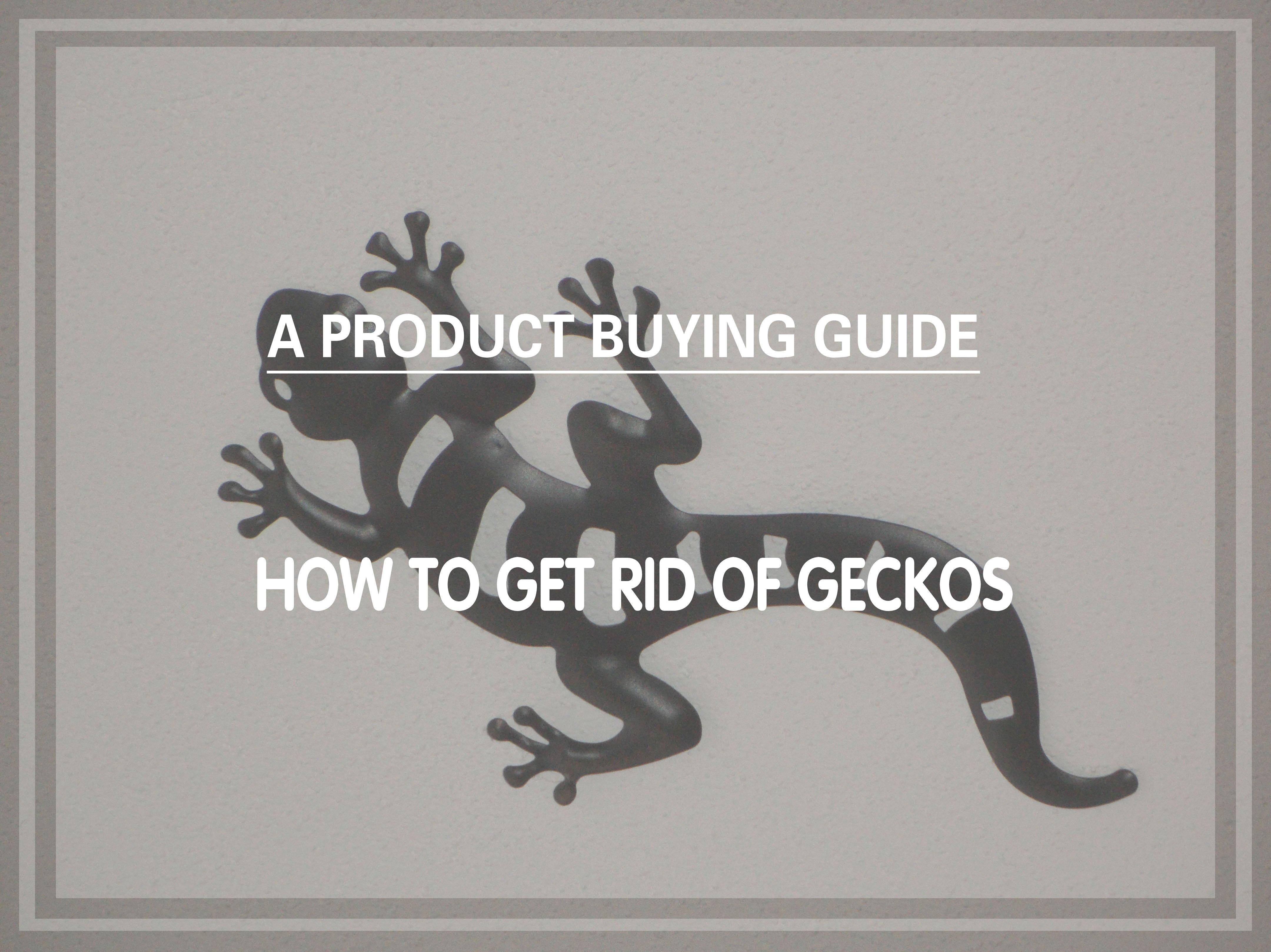 6 Best Gecko Repellents to Buy In 2019 - Pest Wiki