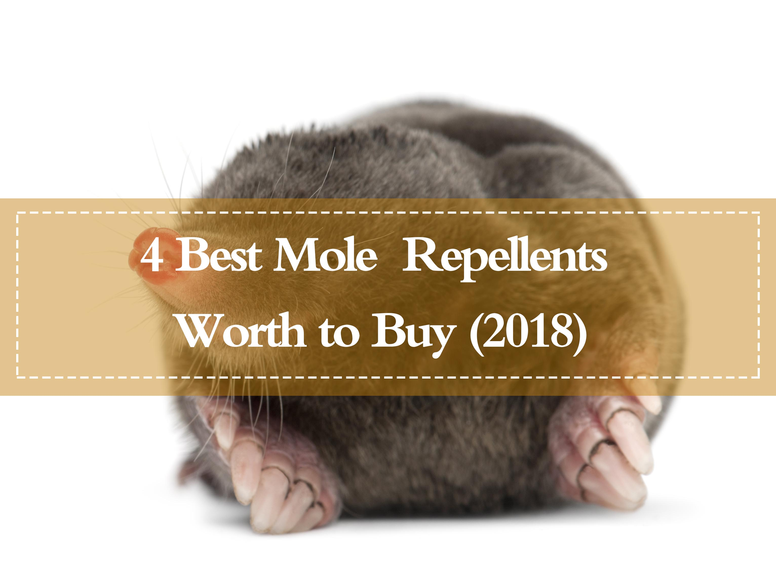 Top 4 Best Mole Repellents Worth to Buy