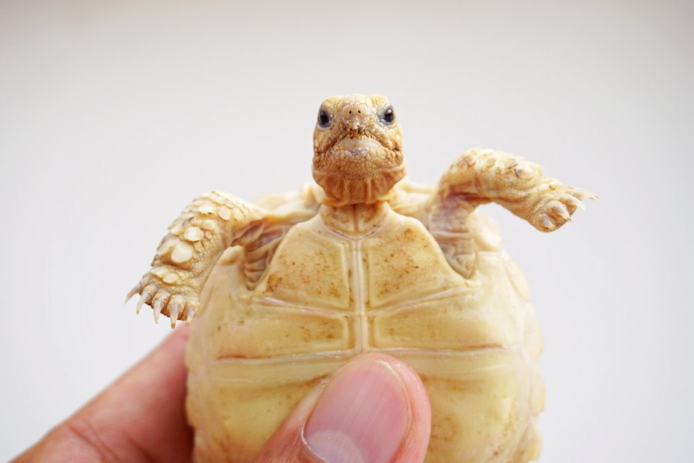 Moving Your Tortoise