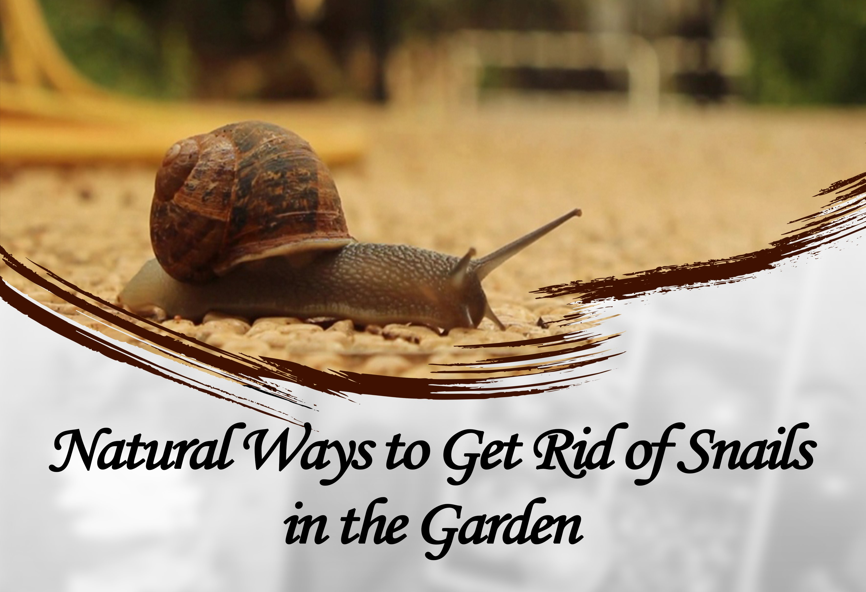 Natural Ways to Control Snails in the Garden(2018) - PestWiki
