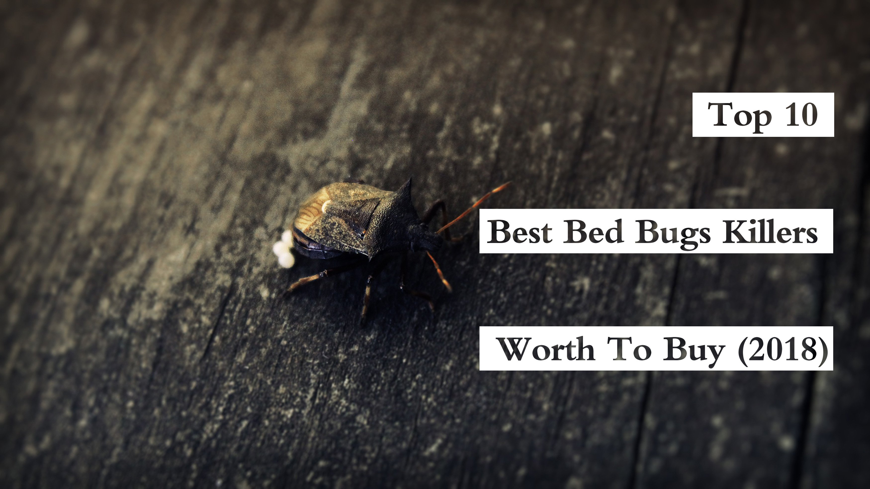 Top 7 Best Bed Bug Killers Worth To Buy (2019) - Pest Wiki