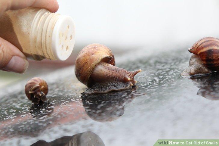 control snails