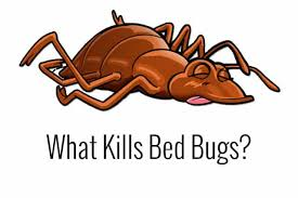 dead bed bug