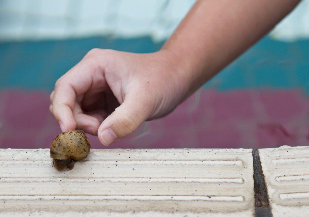 pick snails