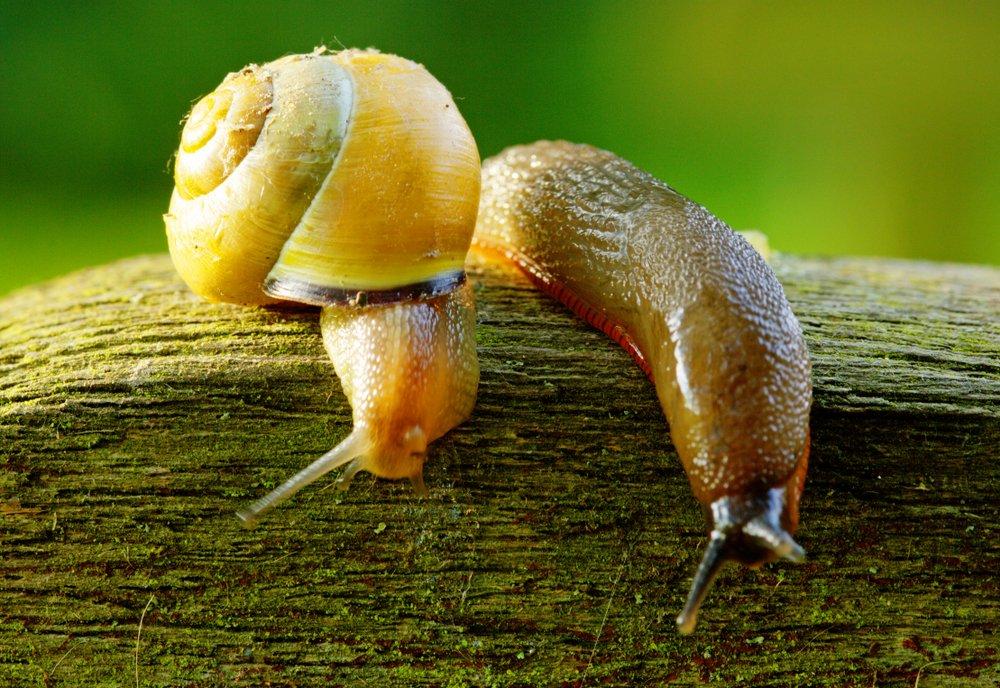 snail&slug