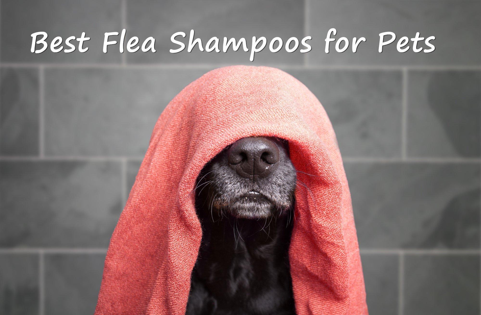 Best Flea Shampoos for Pets