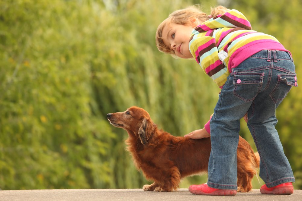 Ticks on Dogs,